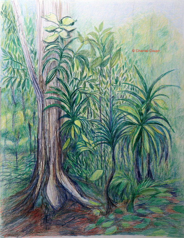 Tropical Forest-50X65cm