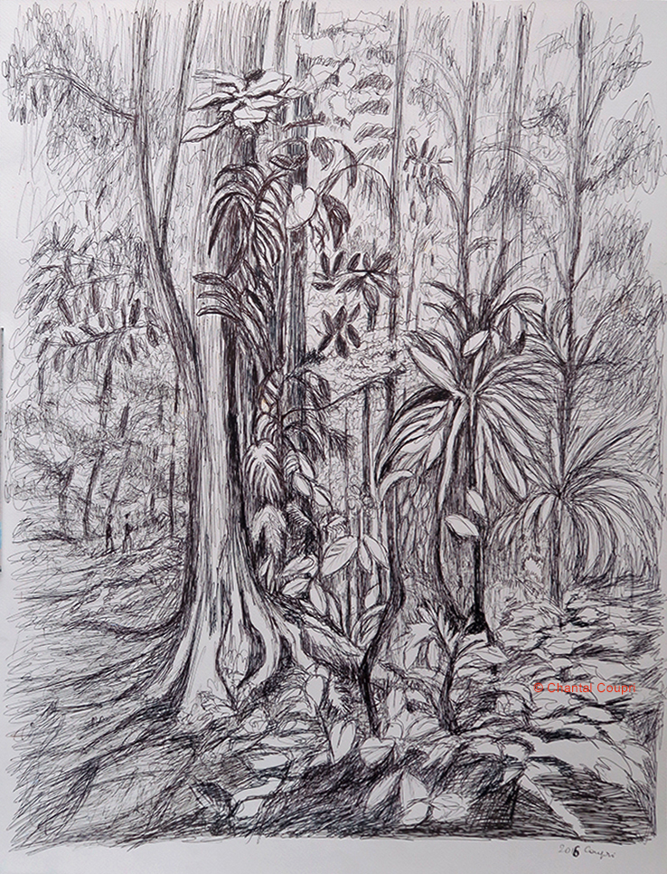 Tropical Forest 1 50x65 cm
