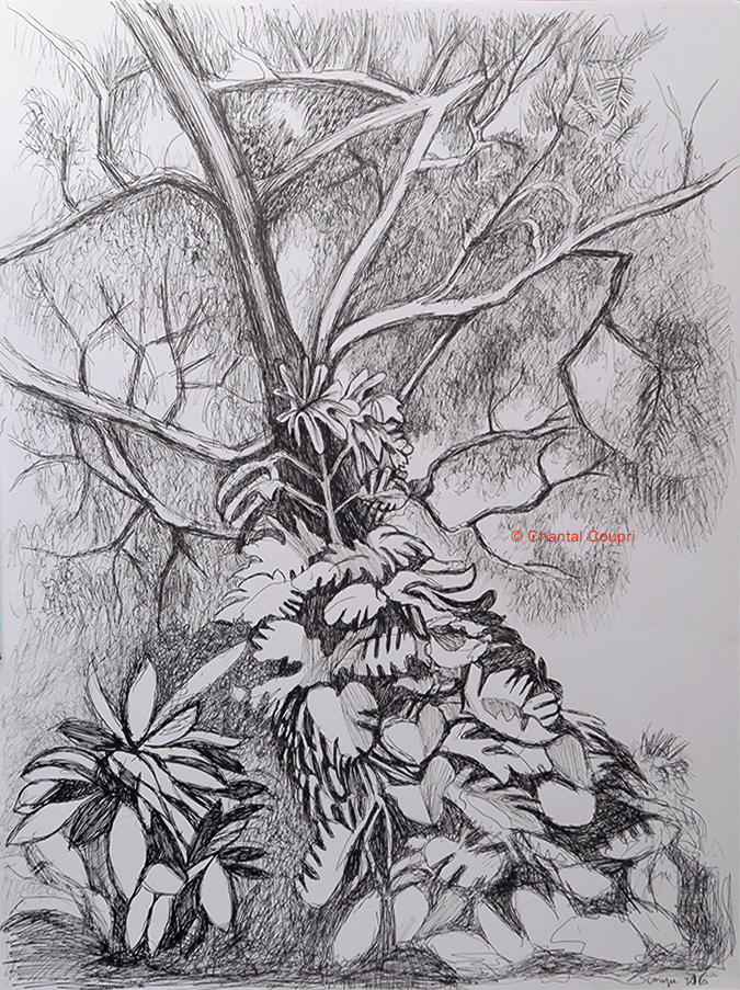 Branches  & Leaves 50x65 cm