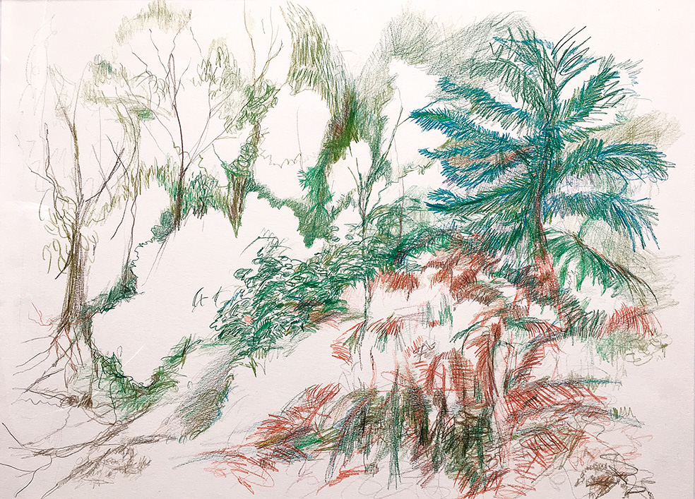 Ferns in forest-50X65cm